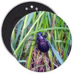 Botón de arrastre del escarabajo pins