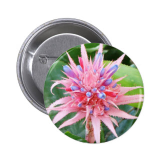 Botón de Bromeliad Pins