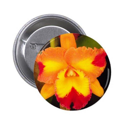 Botón de Cattleya
