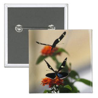 Botón de la danza 3 de la mariposa pin cuadrado