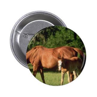 Botón de la familia del caballo pins