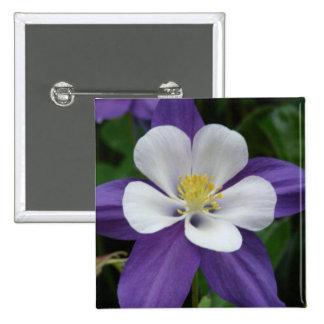 Botón de la flor púrpura y blanca de Columbine