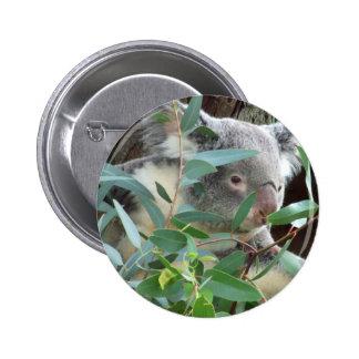 Botón de la fotografía de la koala pins