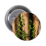 Botón de la hiedra pin