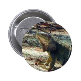 Botón de la iguana de Bahama Pin Redondo De 2 Pulgadas