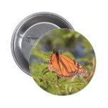 Botón de la mariposa de monarca pin