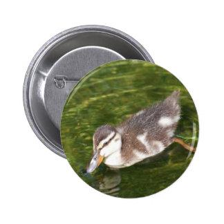 Botón de la natación del pato del bebé pins