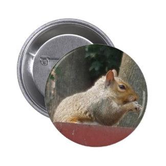 Botón de la nuez de la ardilla pins