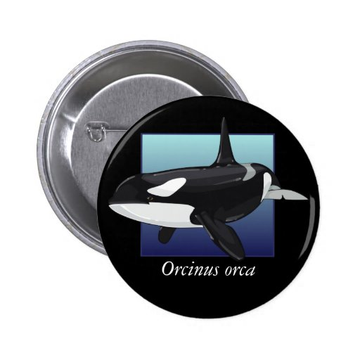 Botón de la orca, redondo pin