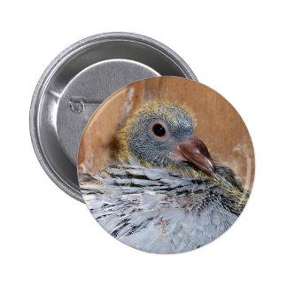 Botón de la paloma autoguiada hacia el blanco del  pin