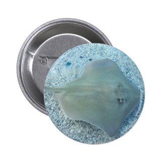 Botón de la pastinaca del agua dulce pin