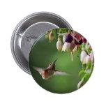 Botón de la planta del colibrí y de la flor de Fus Pins