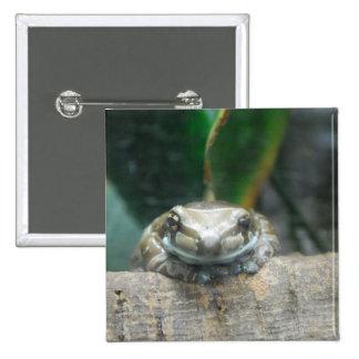 Botón de la rana de la leche del Amazonas