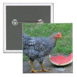 Botón de la sandía del pollo pins