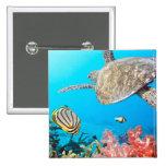 ¡botón de la vida marina - gran regalo para los ni pin