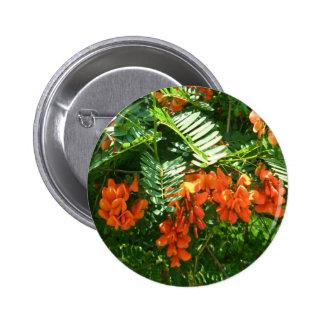 Botón de las glicinias del escarlata (punicea) de  pin redondo de 2 pulgadas