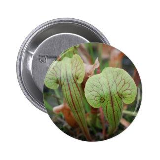Botón de las plantas de jarra pin