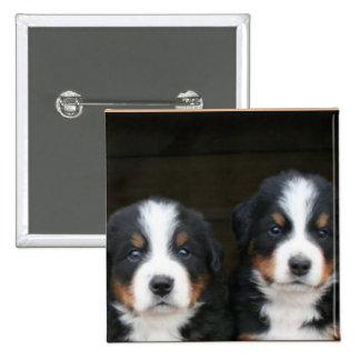 Botón de los perritos del perro de montaña de Bern
