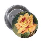 Botón de los rosas amarillos del vintage pin