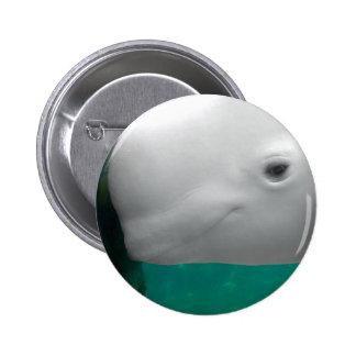 Botón de observación de la beluga pins