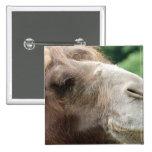 Botón del camello árabe pin