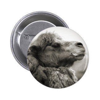 Botón del camello pin redondo de 2 pulgadas