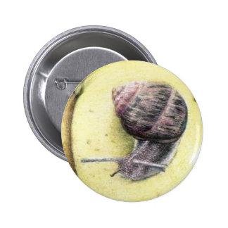 Botón del caracol