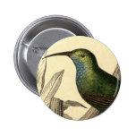Botón del colibrí del vintage pin