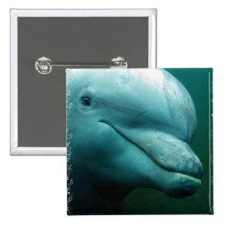 Botón del cuadrado del delfín de Bottlenose Pin