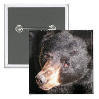 Botón del cuadrado del oso negro pin cuadrado