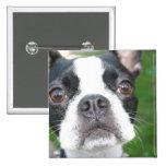 Botón del cuadrado del perrito de Boston Terrier Pins