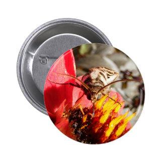 Botón del de la polilla de Owlet Pin