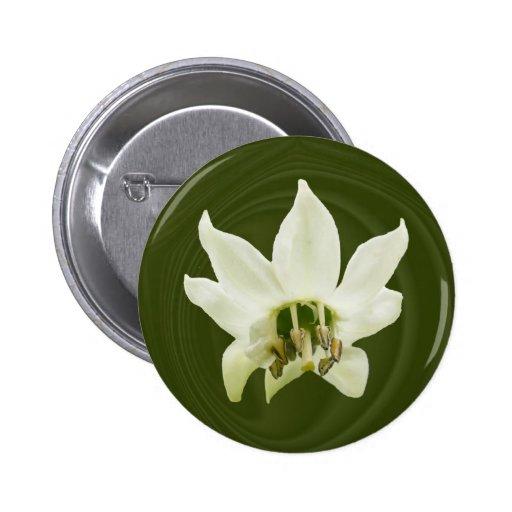 Botón del ~ del extracto de la flor de la pimienta pin