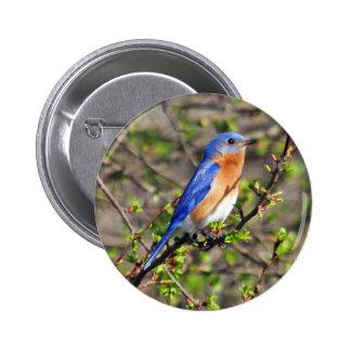 Botón del este del Bluebird Pin Redondo De 2 Pulgadas