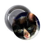 Botón del gatito del calicó pin