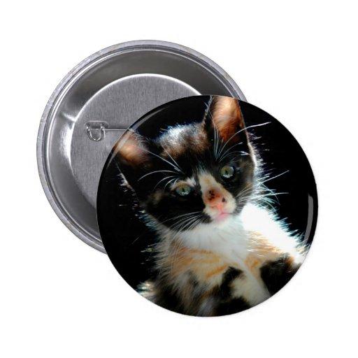 Botón del gatito del calicó pins