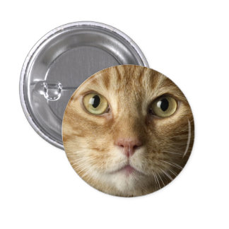 Botón del gatito pins