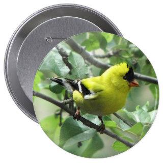 Botón del Goldfinch