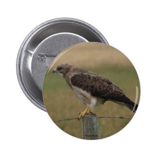 Botón del halcón de B0010 Swainsons Pin Redondo De 2 Pulgadas