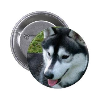 Botón del husky siberiano