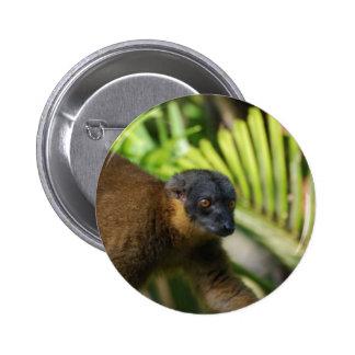 Botón del Lemur de Brown Pin