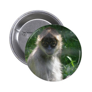 Botón del mono de araña pins