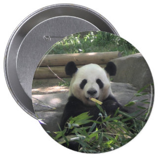 Botón del oso de panda pin