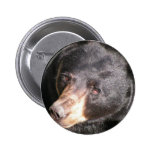 Botón del oso negro pin
