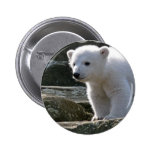 Botón del oso polar del bebé pin