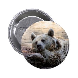 Botón del oso que soña despierto pin