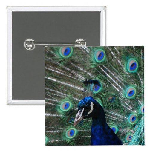 Botón del pájaro del Peafowl Pins