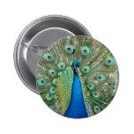 Botón del pavo real pins