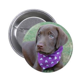 Botón del perrito de Labrador del chocolate Pin Redondo De 2 Pulgadas