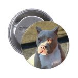 Botón del perrito de Staffordshire Terrier america